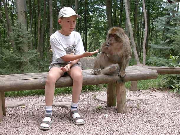 forêt des singes alsace